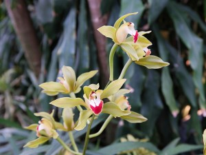 Pflanzen Stadtgärtnerei Zürich